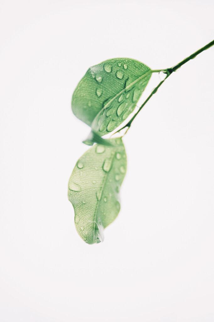 Agua en las hojas en la naturaleza
